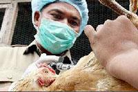 Птичий грипп откладывается